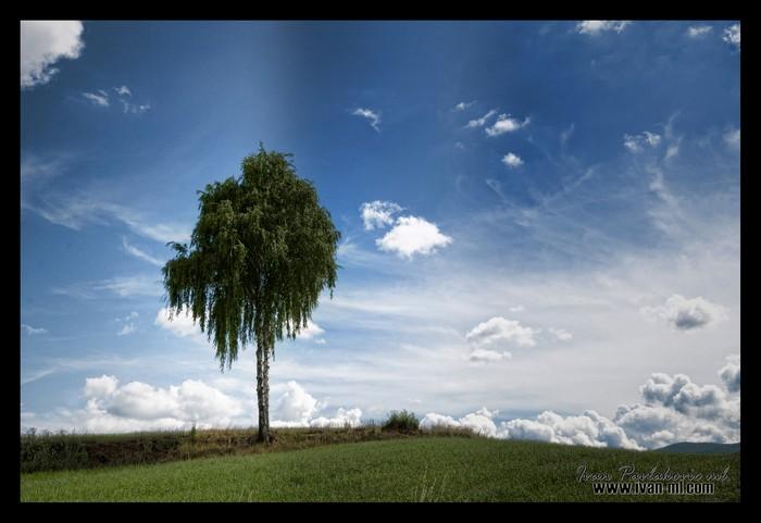 breza.jpg